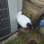 Clark Heating & Air Conditioning Waco, Texas - Exterior Unit Condensation